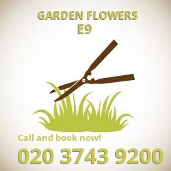 E9 easy care garden flowers Homerton