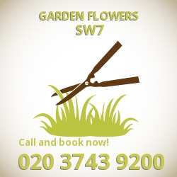 SW7 easy care garden flowers Kensington