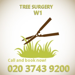 Regent Street effective cutting trees W1