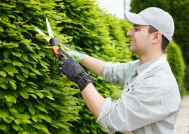 Hedging and Trimming in Lambeth  Made Easy
