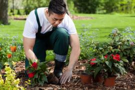 What Are The Benefits Of Professional Gardening Services In Notting Hill?