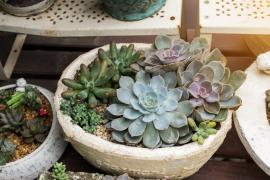 Starting Your Own Apartment Garden In Harrow
