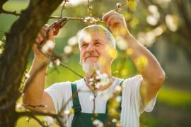 Hiring Experienced Gardeners for Your Garden Maintenance in Enfield