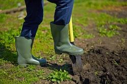 Cann Hall planting hedges E11