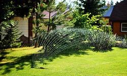 E2 garden hedge Shoreditch