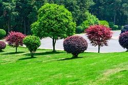 Aldgate planting hedges EC3