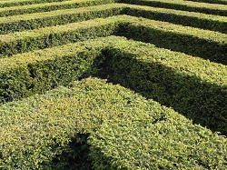 hedges maintenance EN10