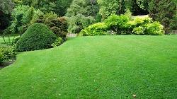 N1 garden design Islington