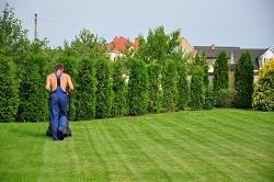 Harringay planting hedges N4