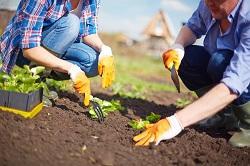 St Johns planting hedges SE8