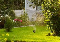 SW1 garden edging ideas