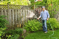 hedges maintenance SW2
