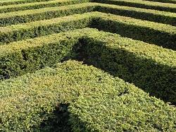 hedges maintenance TW11