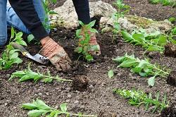 Park Lane planting hedges W1