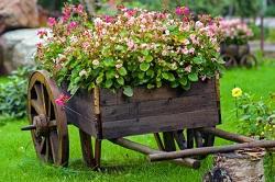 DA17 perennial flowers planning Belvedere