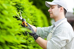 Bounds Green shrubs and bushes removal N22