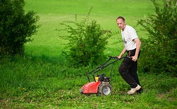 maintaining lawns