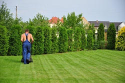 KT23 lawn care Great Bookham