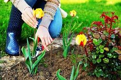 turning soil and weeding Harlington