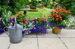Motspur Park bedding plants care KT3