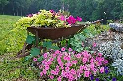 KT6 garden landscaping Surbiton