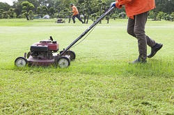 WD2 lawn care Watford